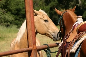 horses-img
