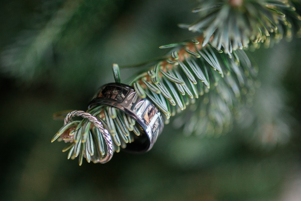 rings on evergreen tree