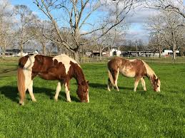 Horses in a pasture